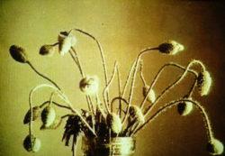 Linnaeus' Flower Clock, Sittard (Installation Views)